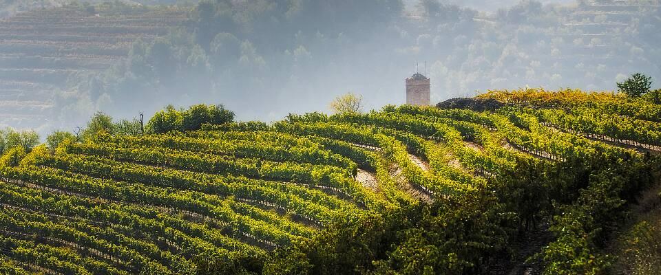 Smak 9 magnumviner fra de beste vinmarkene i Spania