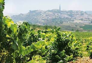 Etter denne kvelden vet du mye mer om Spanias viner