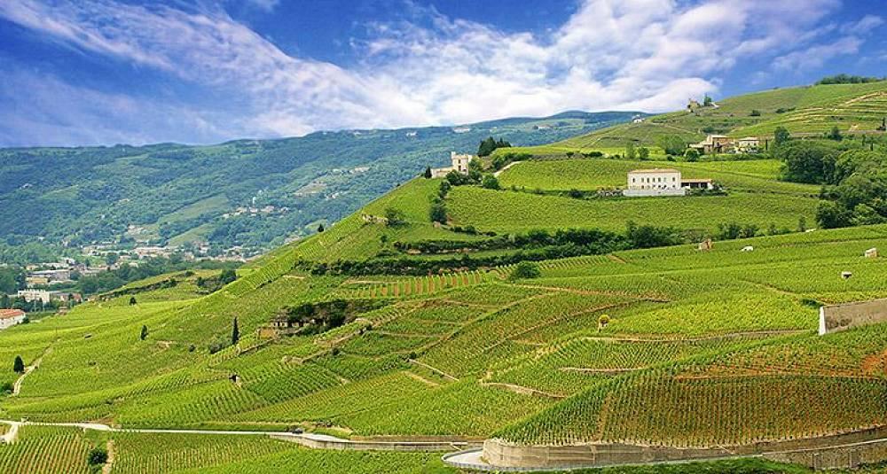 Lær om Frankrikes fantastiske viner av en ekspert – Vinkurs 23. februar i Oslo