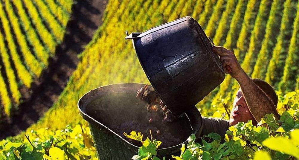 Hormonforstyrrende substanser i vin