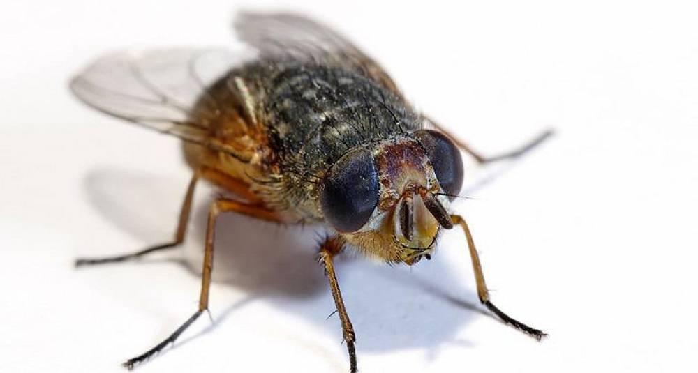 Fluer, skitt og rot på Radisson-restauranter