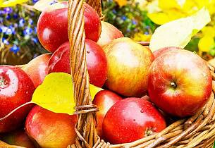 Hvem av disse er årets beste eplemost?