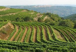 Prisgunstig rødvin til viltet