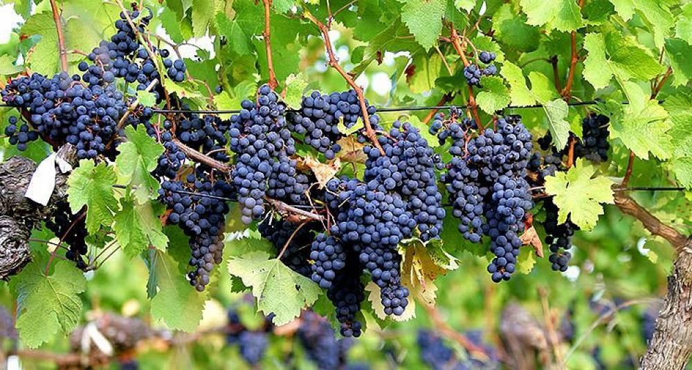 Nyhetene på spesialpolet september 2014 - rødvin