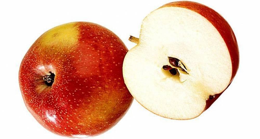 Årets beste eplemost kåres