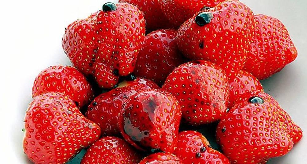 Fråts i jordbærene før de tar slutt for i år