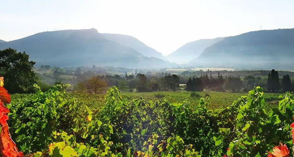 Lær alt om vinene fra den fabelaktige Rhône-dalen – Vinkurs 2. februar i Oslo