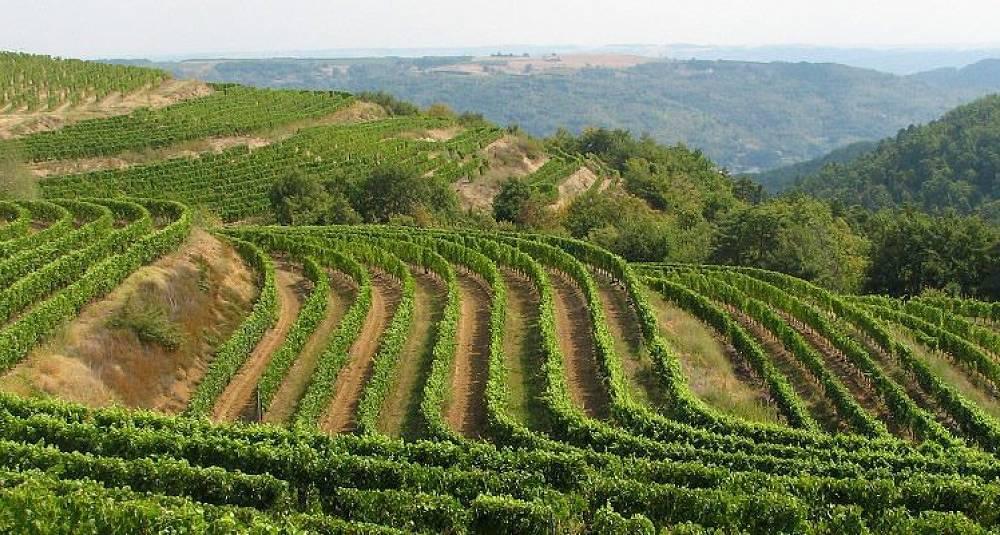 Test av Côtes du Rhône Villages  - Vinsobres, Rasteau, Ventoux og Grignan-Les-Adhémar