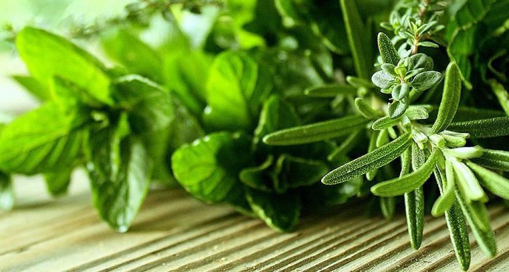 Fasit - Hva vet du om urter?