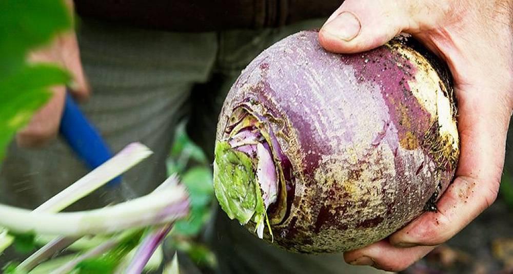Søtere, sprøere og friskere grønnsaker i nord