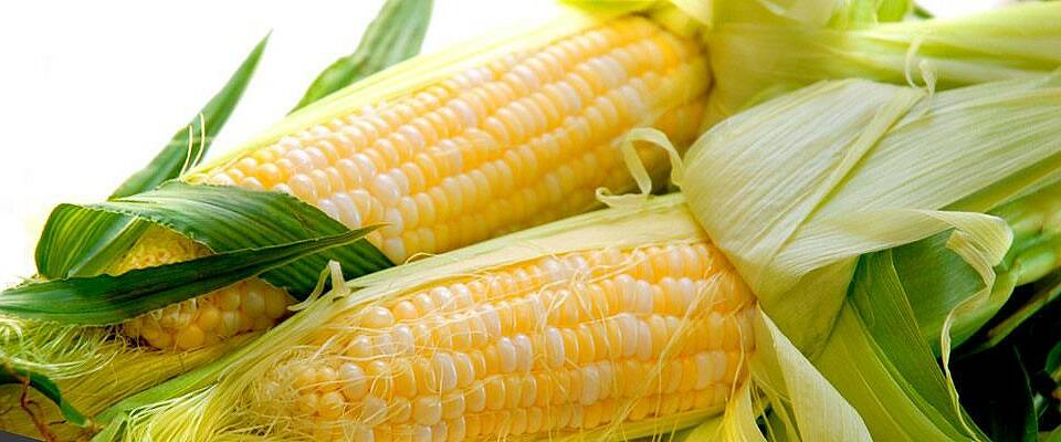 Saftig, søt og nygrillet mais er uimotståelig