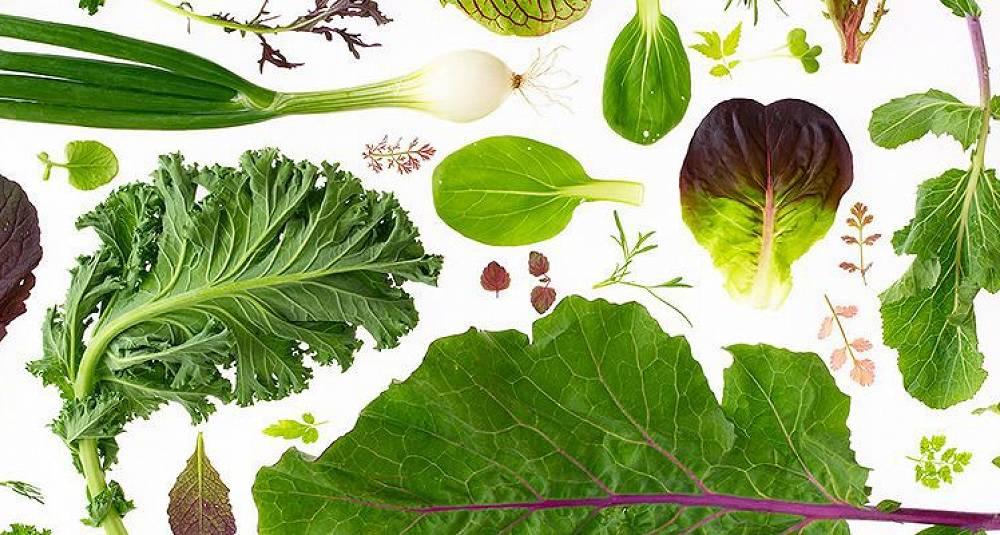 Rå og vegansk mat - 12. og 13. september