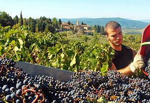Vinkurs 16. september i Oslo - Slik skal viner fra Chianti smake