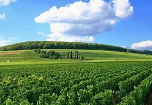 Burgund ønsker større areal