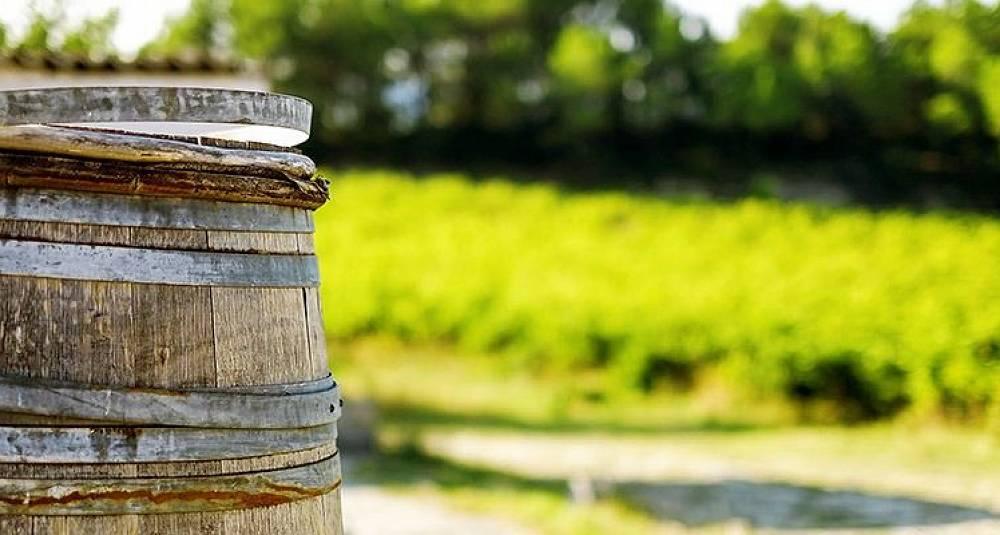 Nordmann lager bedre vin enn naboene i Sør-Rhône