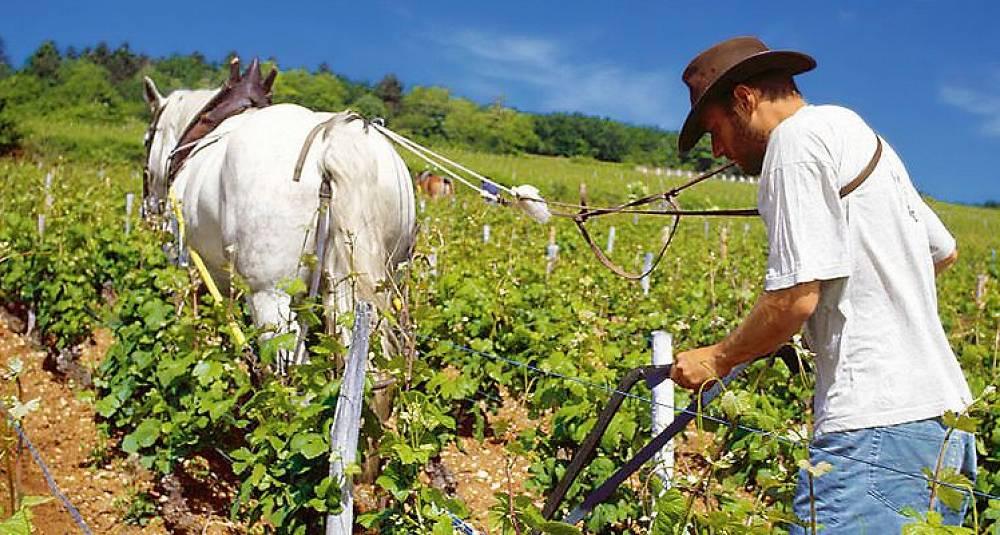 Franske bønder får strengere regler for sprøyting