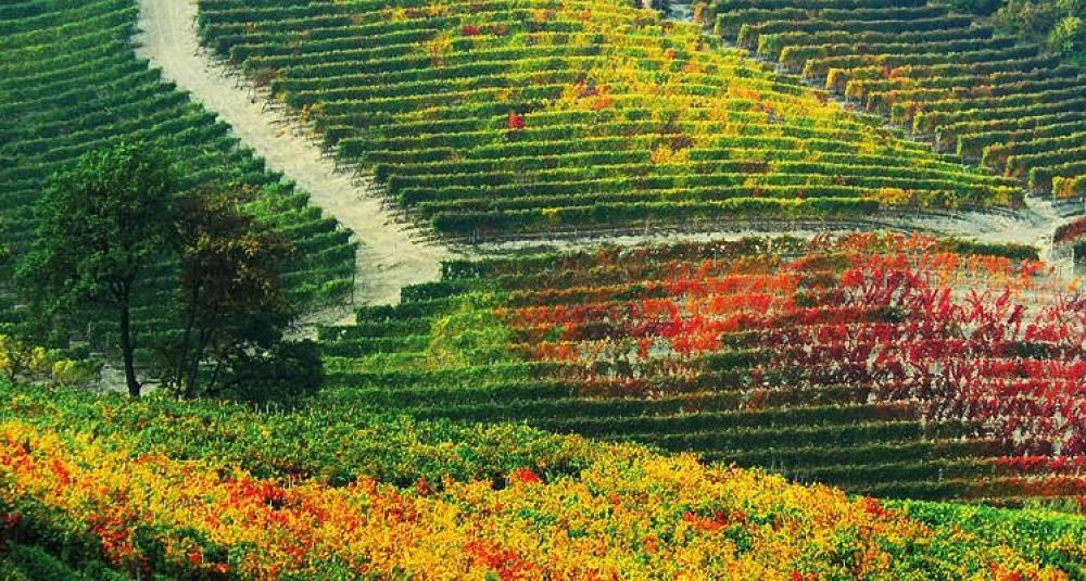 Verdens vinproduksjon faller