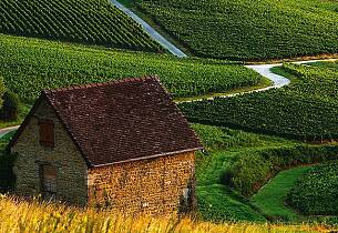 Bli kjent med vinregionen Jura
