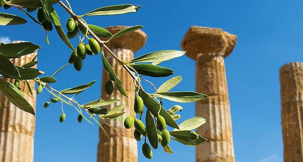 Verdens beste olivenolje er fra Sicilia