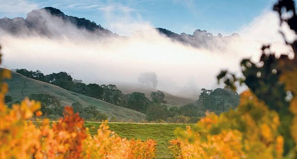 California puster Burgund i nakken