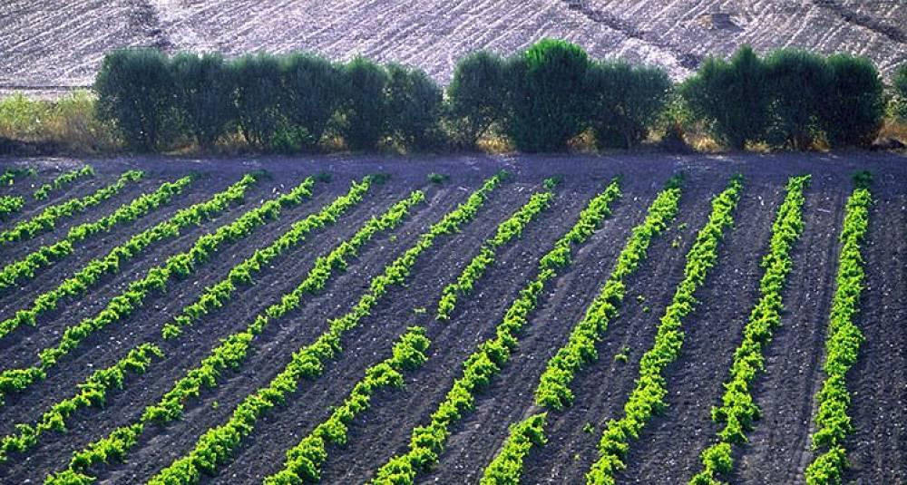 Dette funnet kan forandre vinhistorien