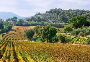 Smak de noble vinene fra Toscana - Vinkurs 13. april i Oslo