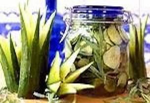 Syltet slangeagurk med ingefær og estragon