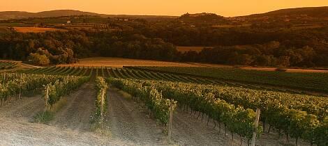 Enestående smaking av vin fra Toscana