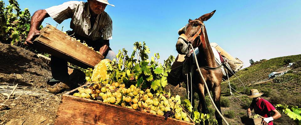 Fra dette helt spesielle stedet kommer viner som har tatt markedet med storm