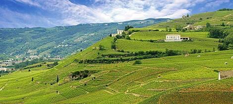 Lær om Frankrikes fantastiske viner av en ekspert