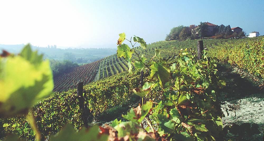Herfra kommer nordmenns favorittviner: Du får smake hele rekken med Piemontes spennende viner