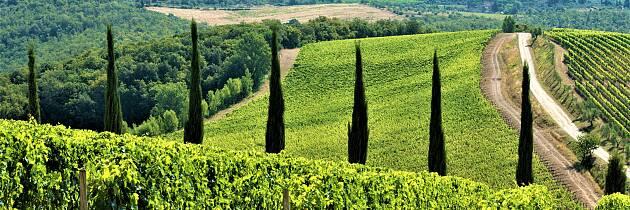 Bli med å smake herlige viner fra Chianti Classico
