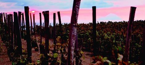Her er det historie i hver dråpe vin