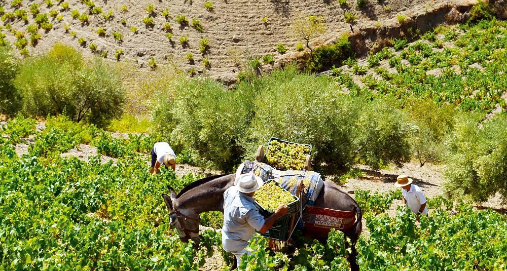Málaga er tilbake på vinkartet - men med en annen type vin