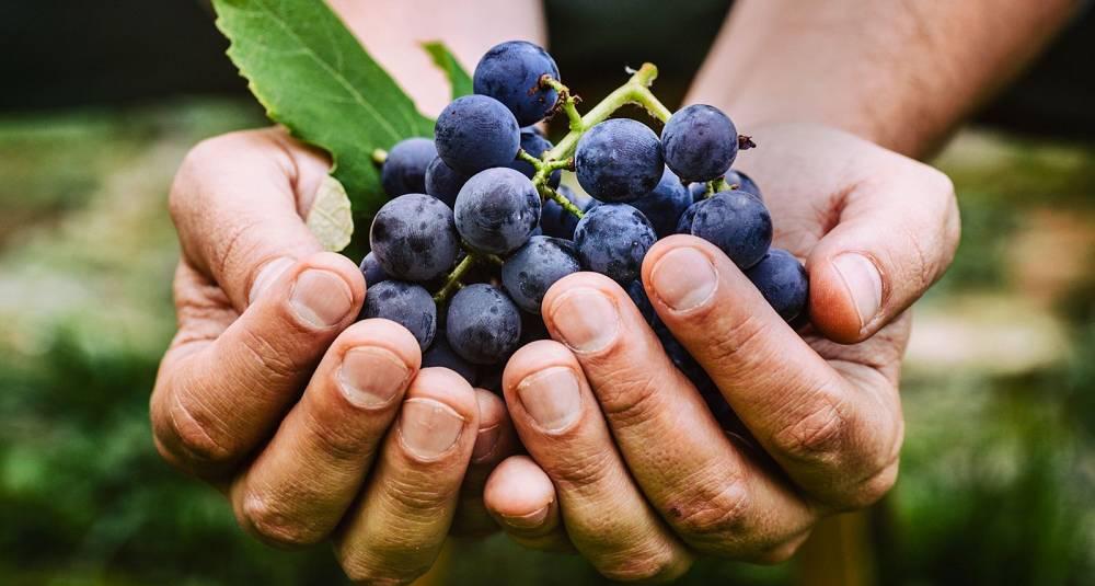 Lær deg å smake forskjell på vin fra ulike land og verdensdeler