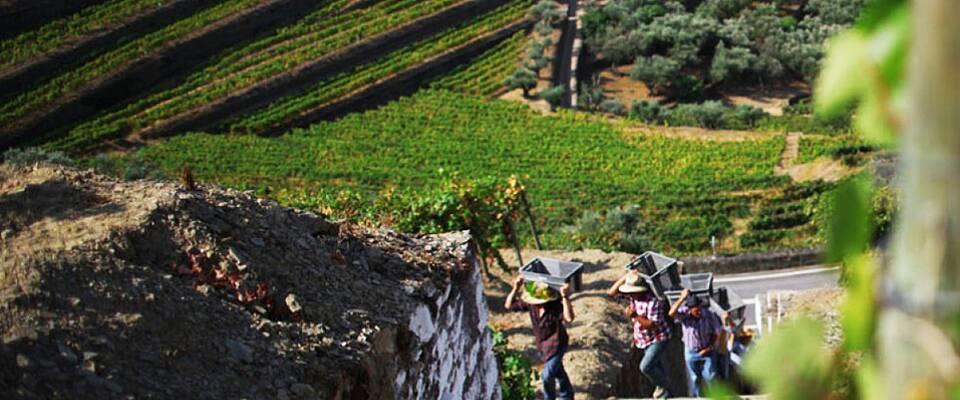 Dette må du få med deg: Du får smake viner som har fått noen av de høyeste skårene som kan oppnås