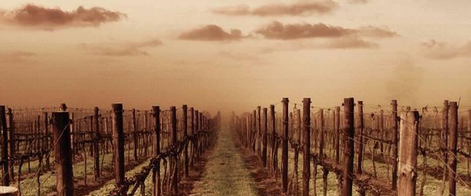 Møt en av Australias mest berømte vinmakere og smak hans ikoniske viner