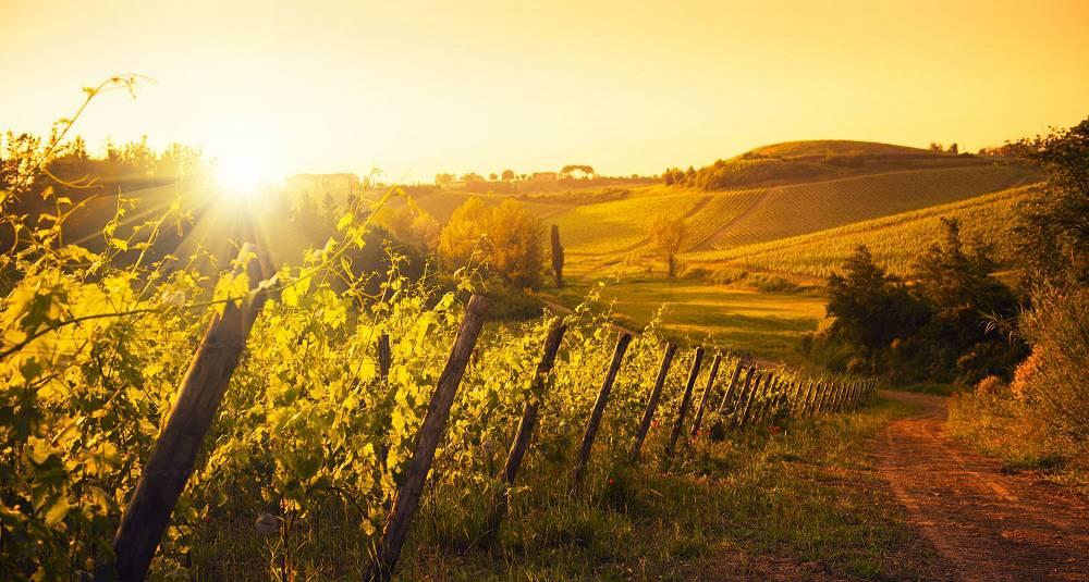 Lurer du på hvorfor Brunello di Montalcino er så ettertraktet? Det får du smake på denne kvelden - samt mye annet