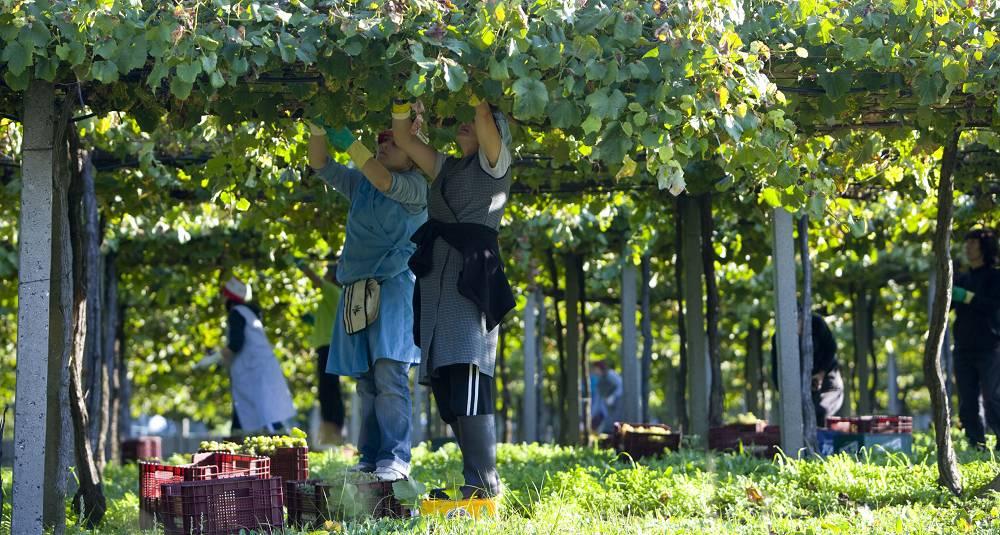 Den nordvestre delen av Spania byr på en rekke kjente og mindre kjente vinskatter