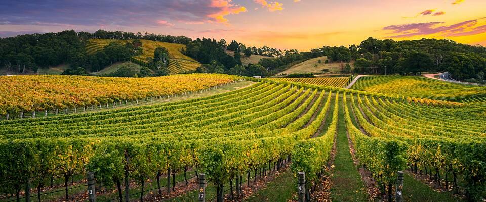 Enestående smaking av viner fra Australias beste produsenter