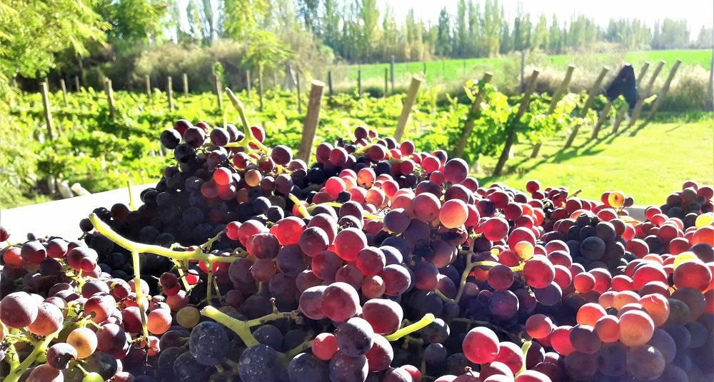 Mendoza får ny energi fra andre druer enn malbec - som grenache