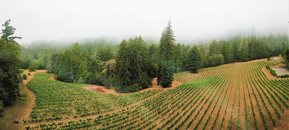 2018-red-car-wine-zephyr-farms-vineyard-drone-panorama-full-size_photoshop-edit_45602144262_o.jpg [340.71 KB]