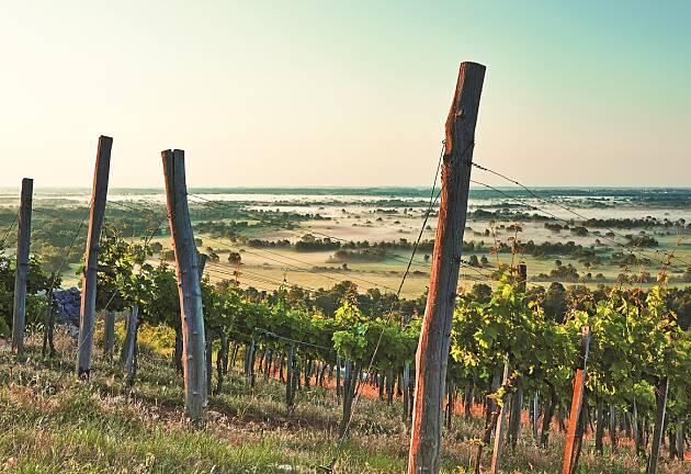 Tokajs vinskatter gjenskapes i tørr versjon