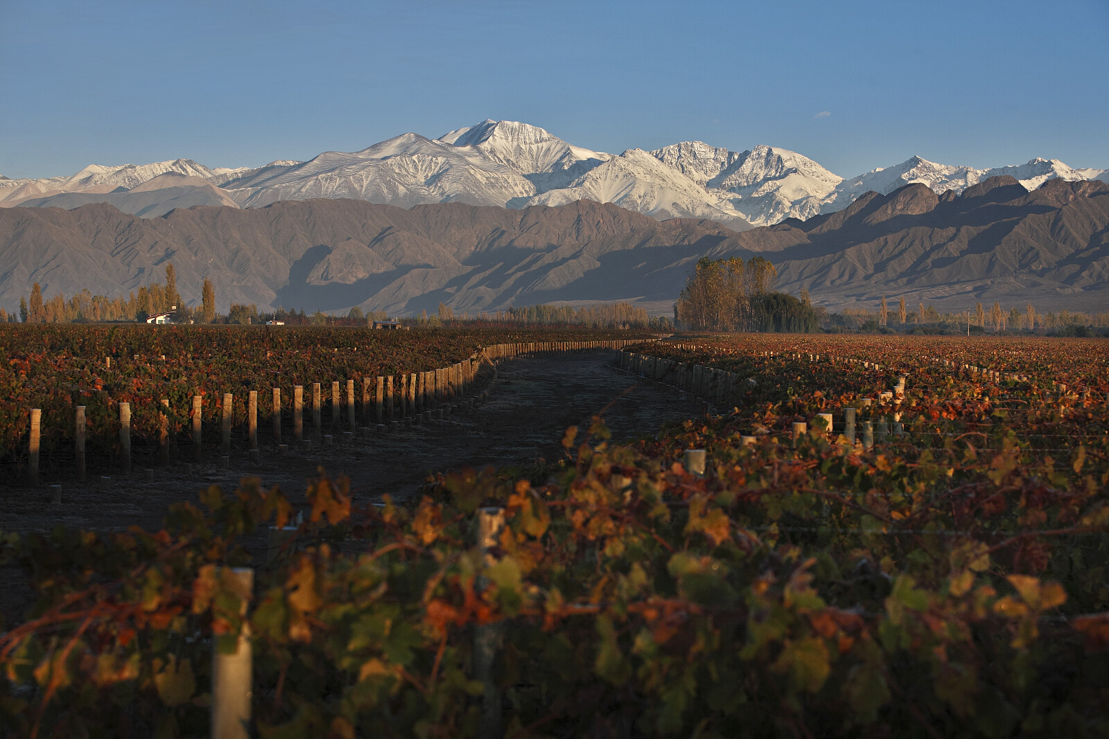 Mendoza-vineyards.JPG [2.26 MB]