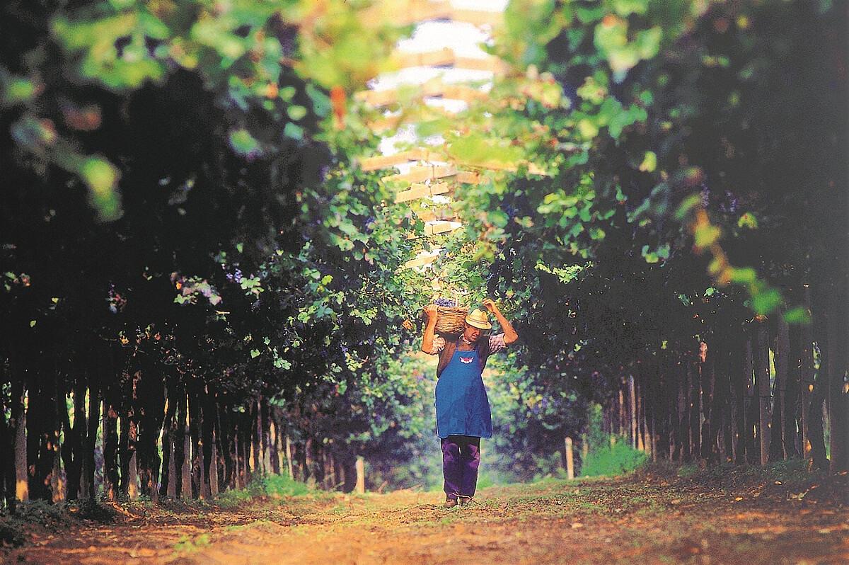 vignaiolo - farmer.jpg [438.62 KB]